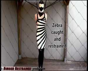Zebra girl caught and restrained - video